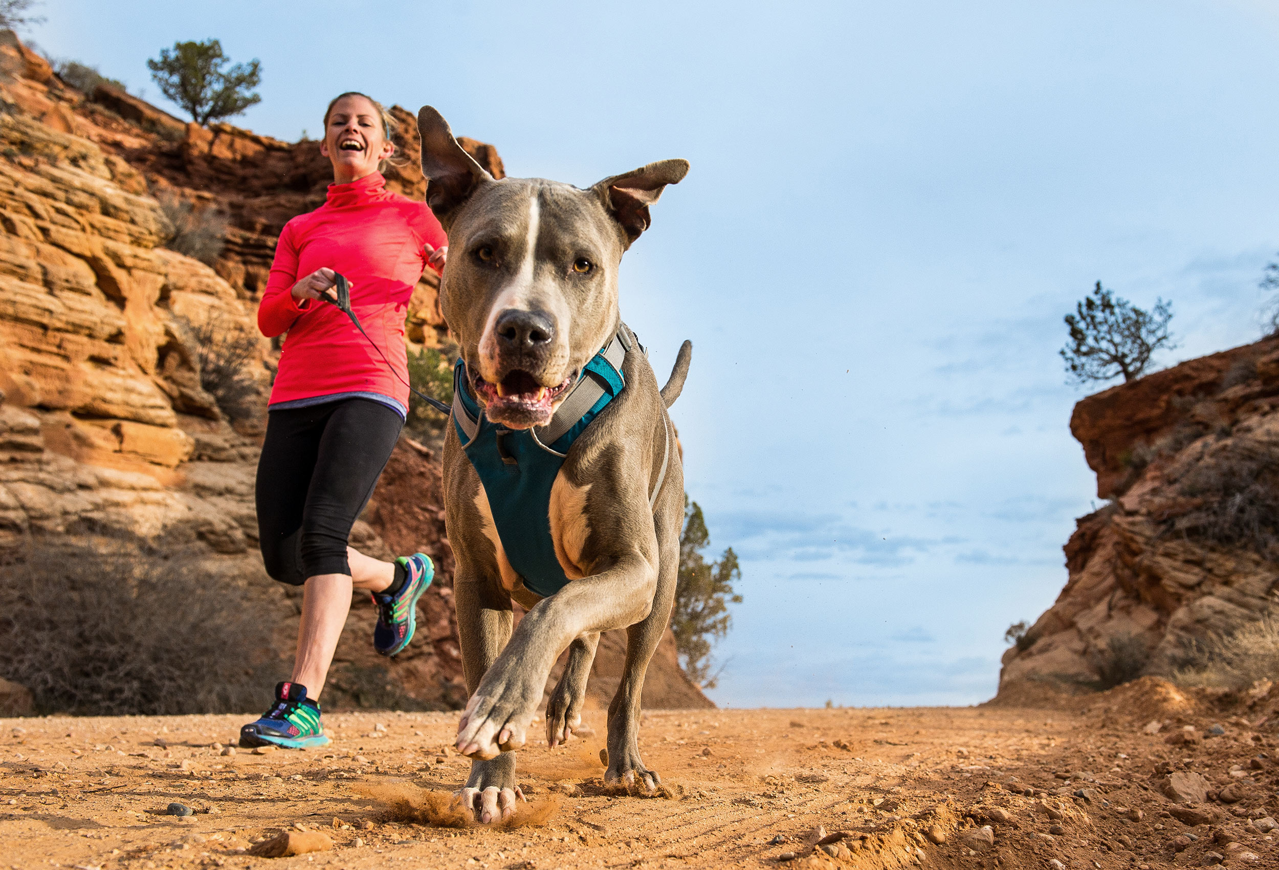 Desert-Dog-Photography-Utah-Running