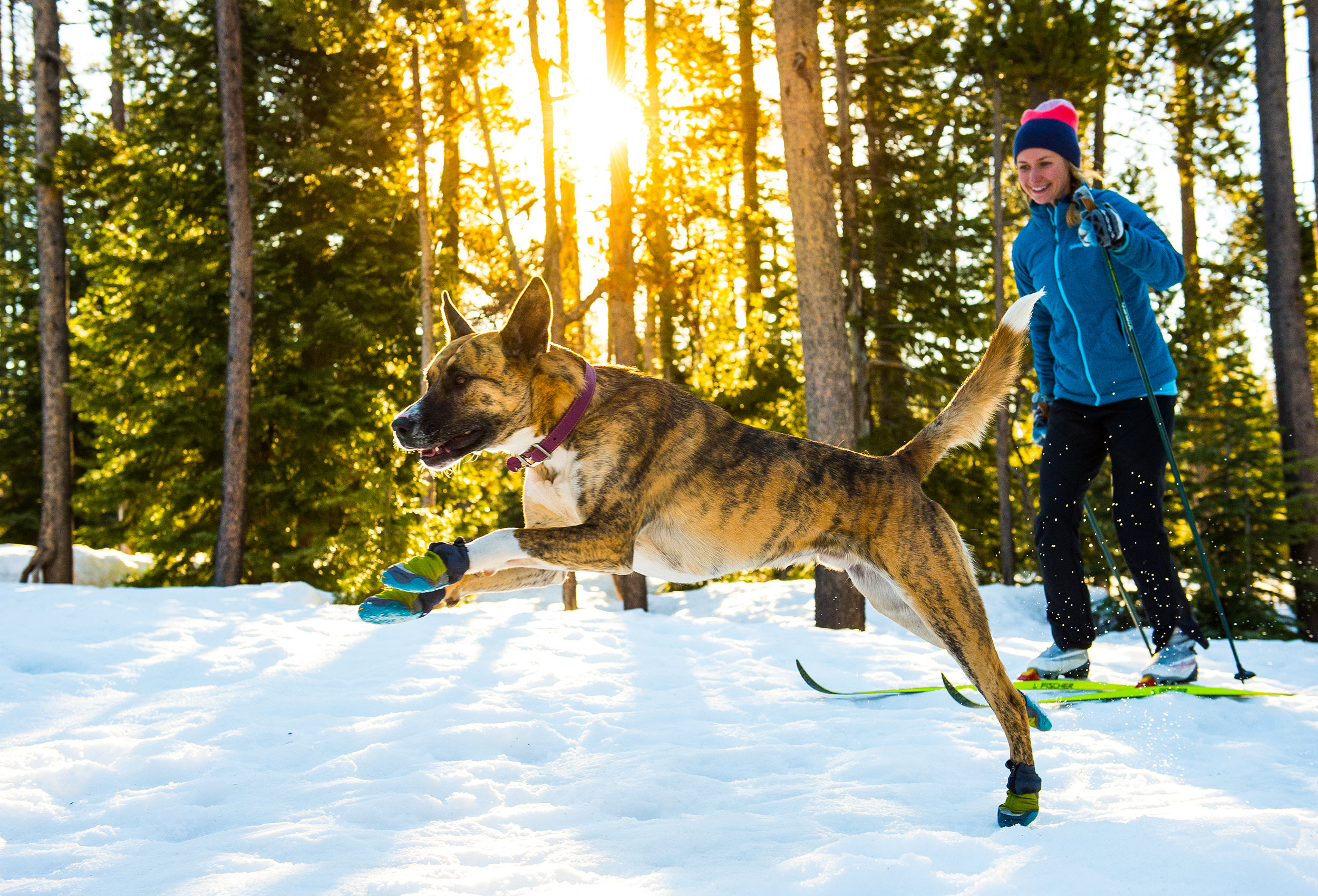 Outdoor-Dog-Photography-Nordic-Skiing