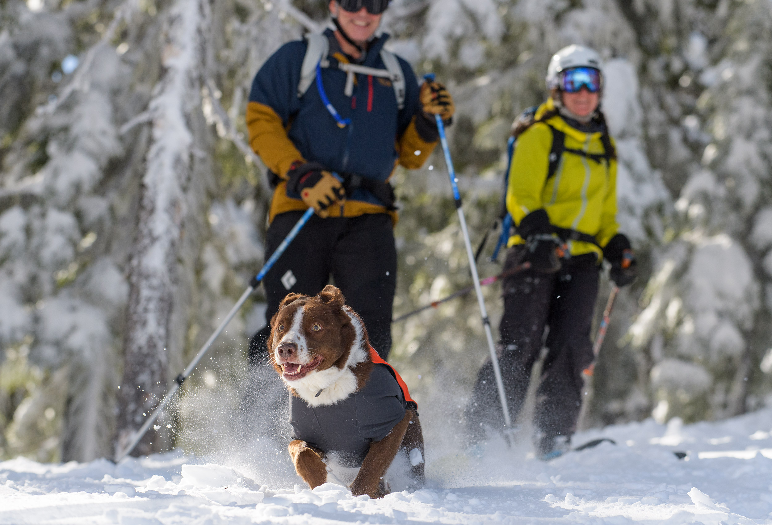 Dog-Running-Through-Snow-Oregon-Photographer