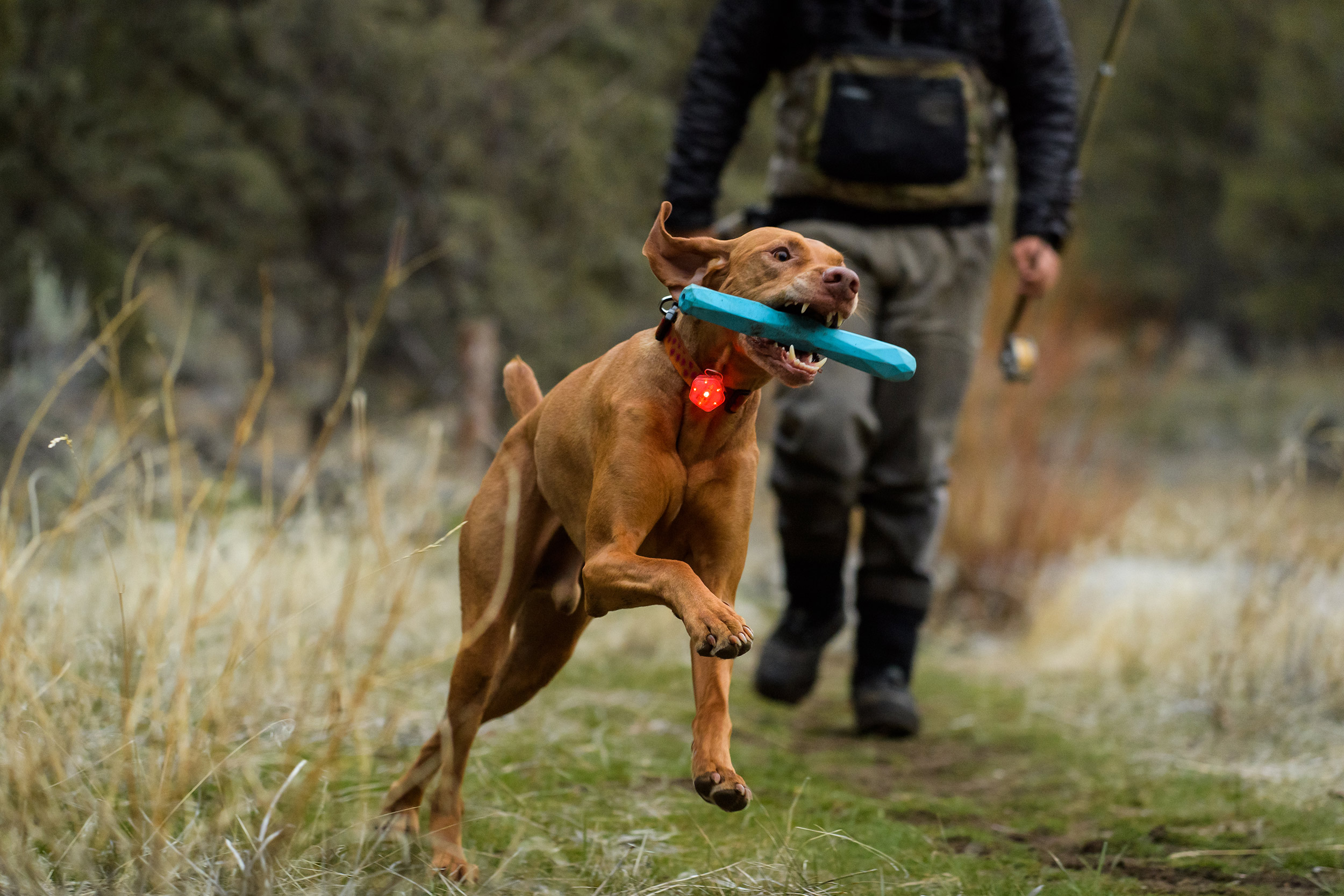Outdoor-Dog-Photograhy-Fly-Fishing