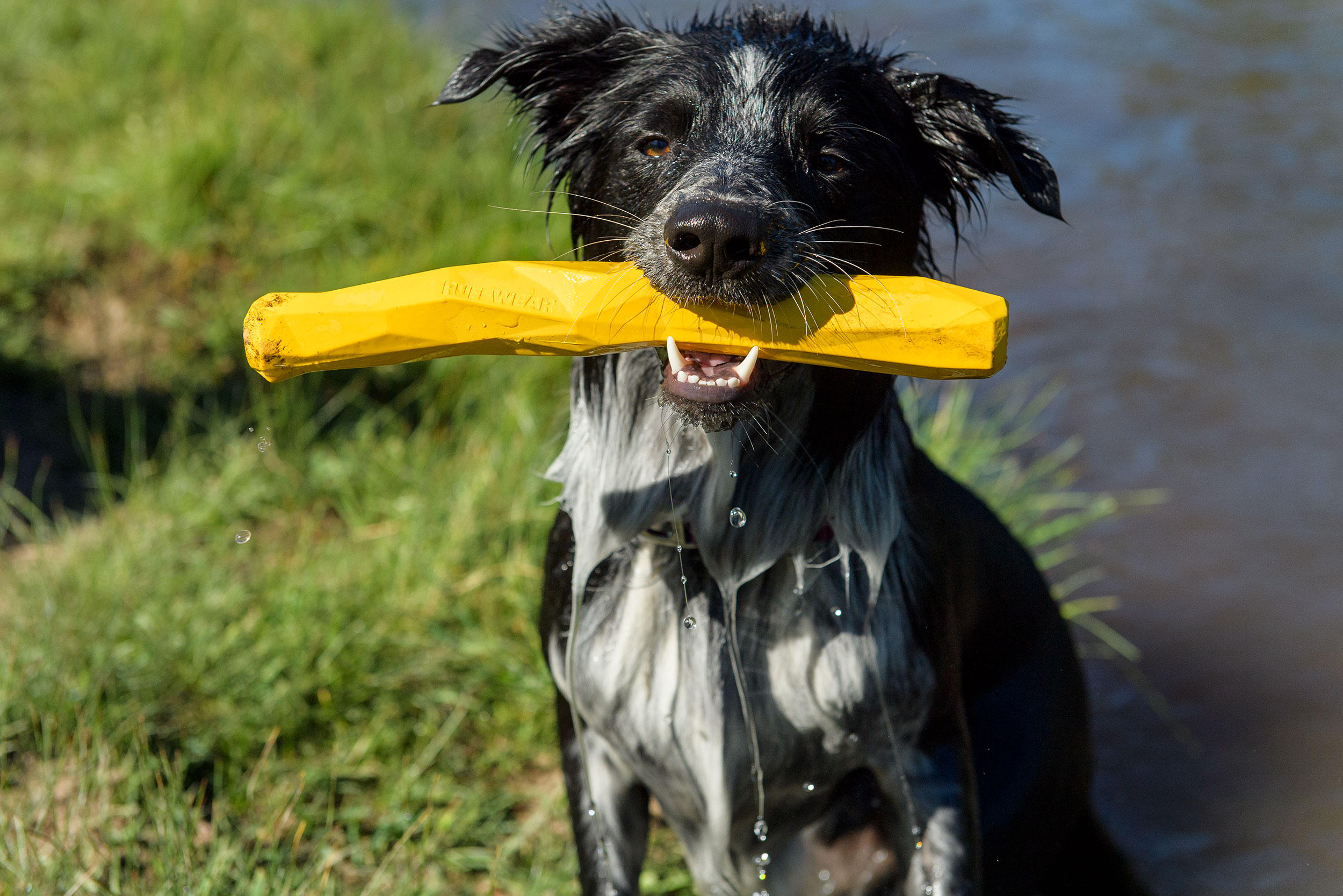 Cute-Pet-Photography-Wet-Dog-Toy