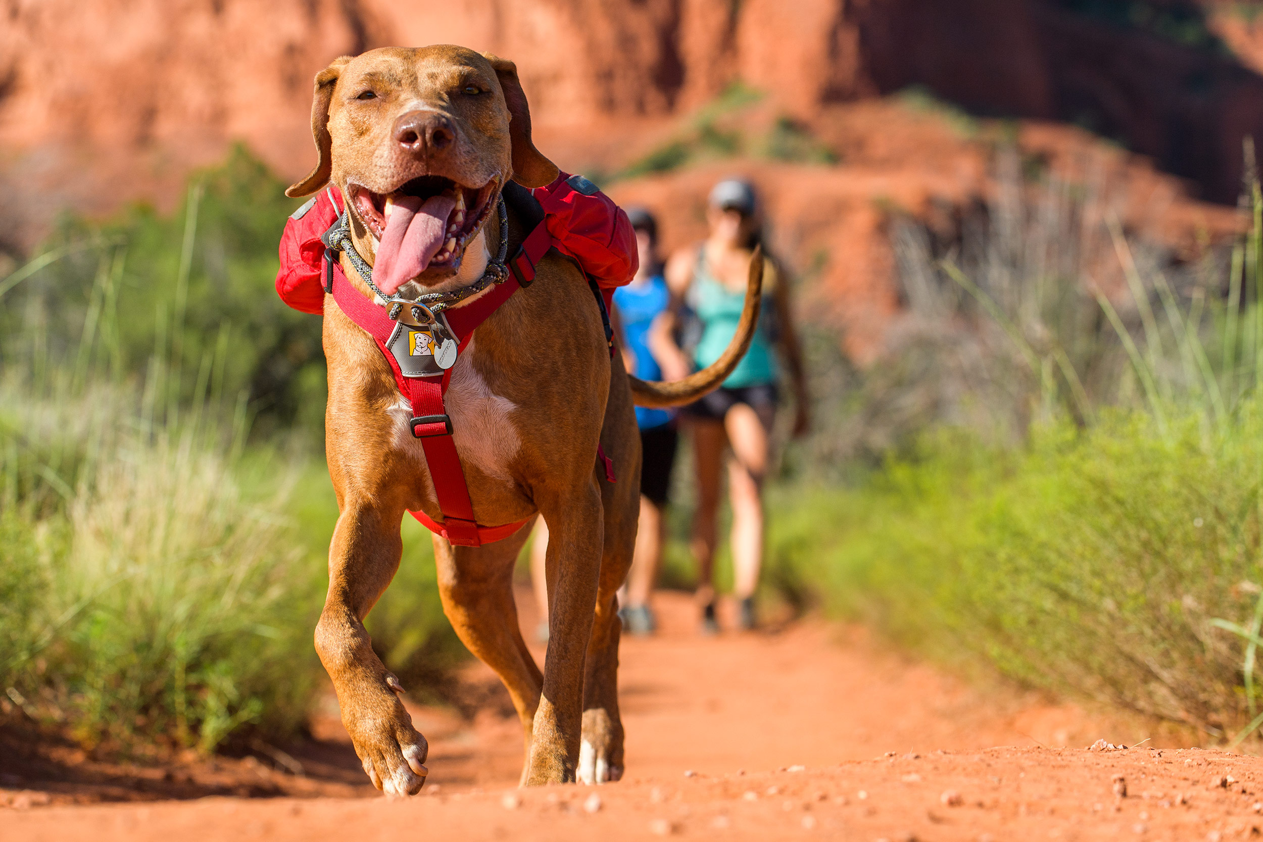 Sedona-Dog-Lifestyle-Photography-Hiking