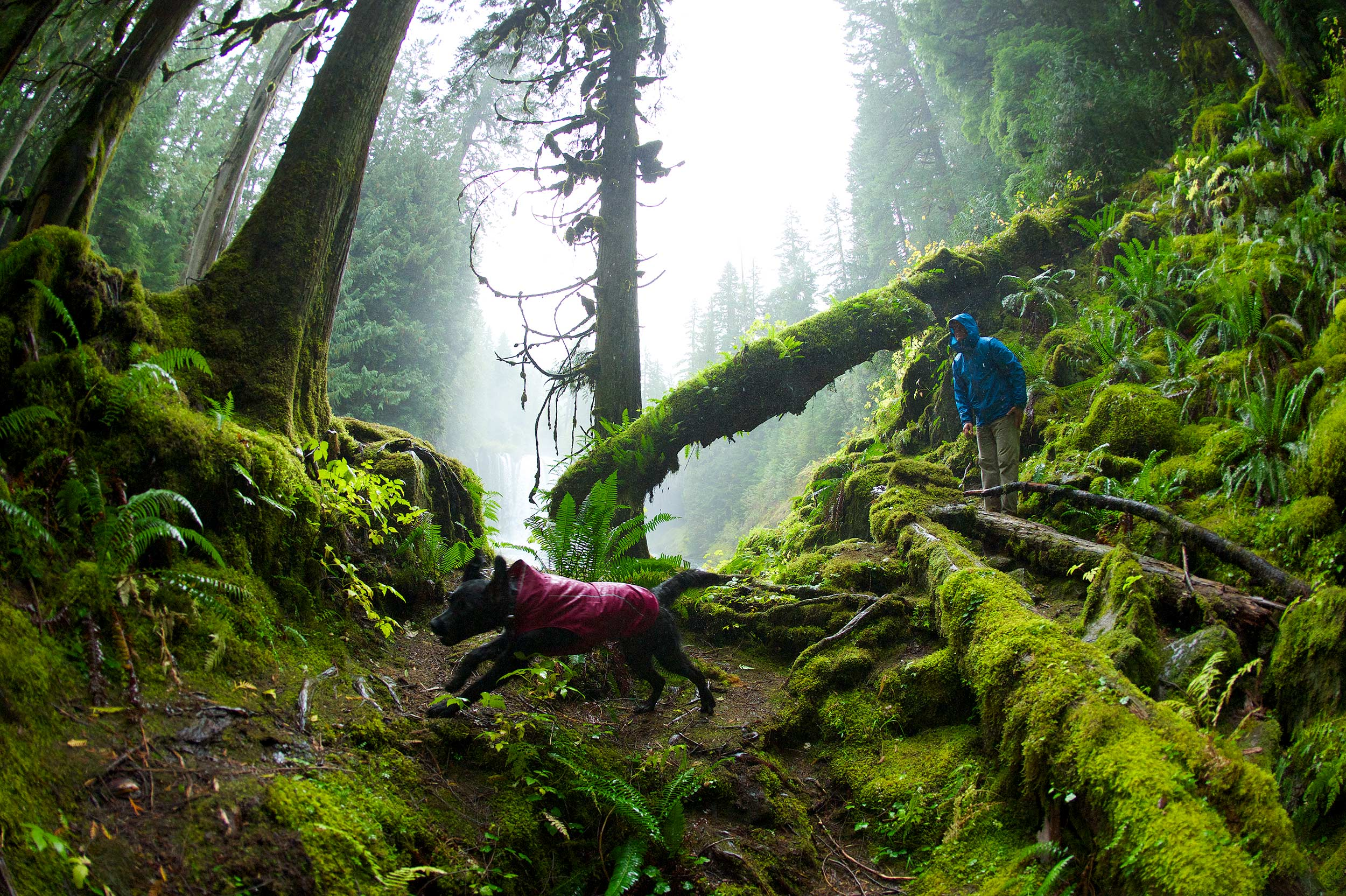 Oregon-Forest-Dog-Lifestyle-Photographer-Northwest